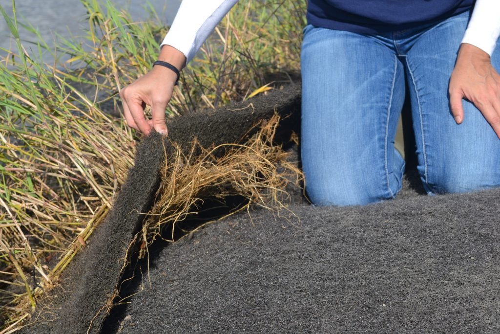 Lifting up of one layer of EcoShield to unveil roots of plants below. Courtesy America's WETLAND Foundation.