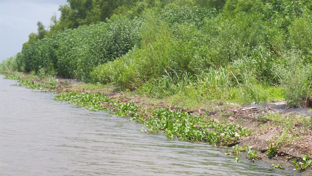 Six months after installation of EcoShield. Courtesy America's WETLAND Foundation.