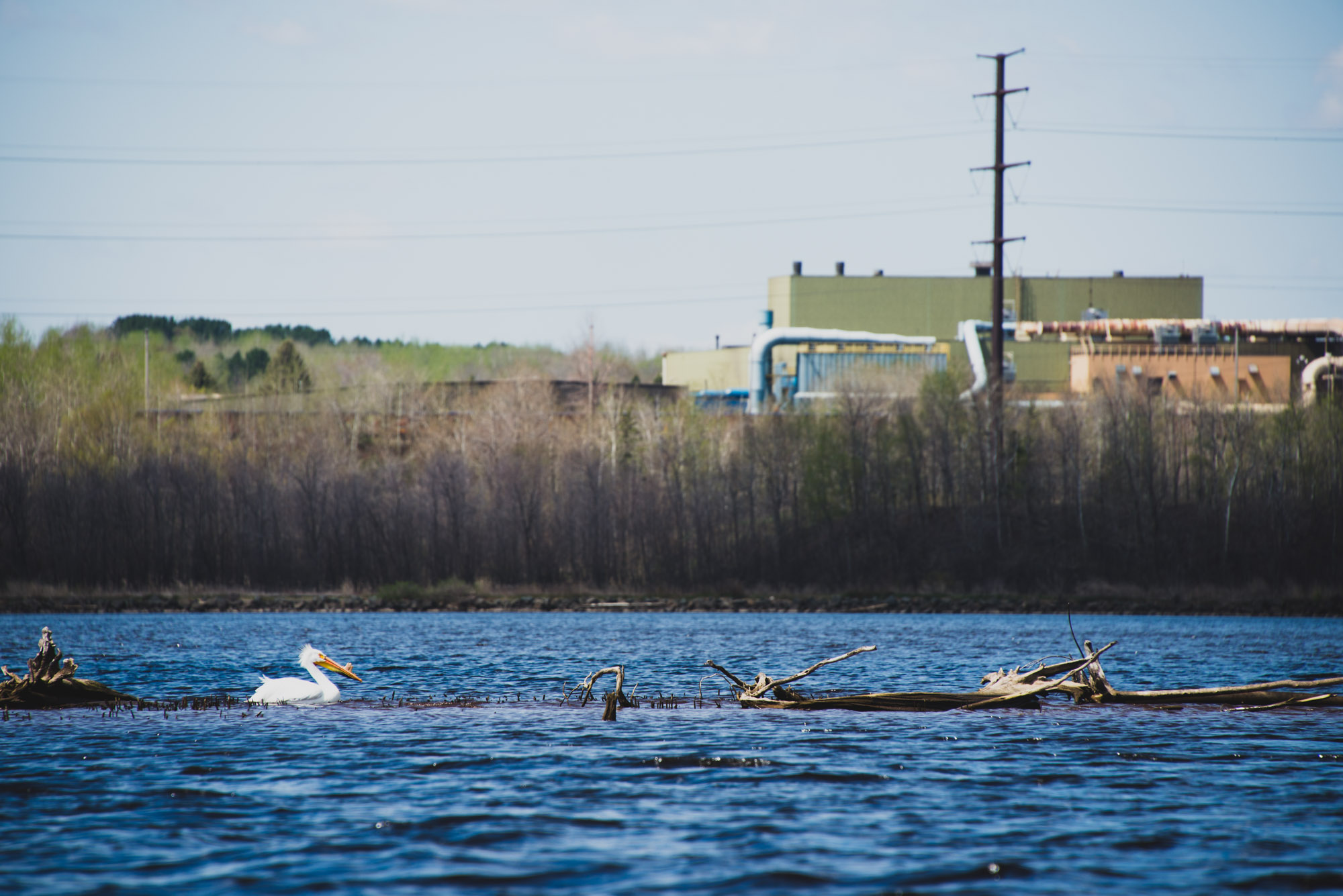A pelican rests in front of a processing plant on the St. Louis River Estuary. Image courtesy of Alex Messenger Photography.