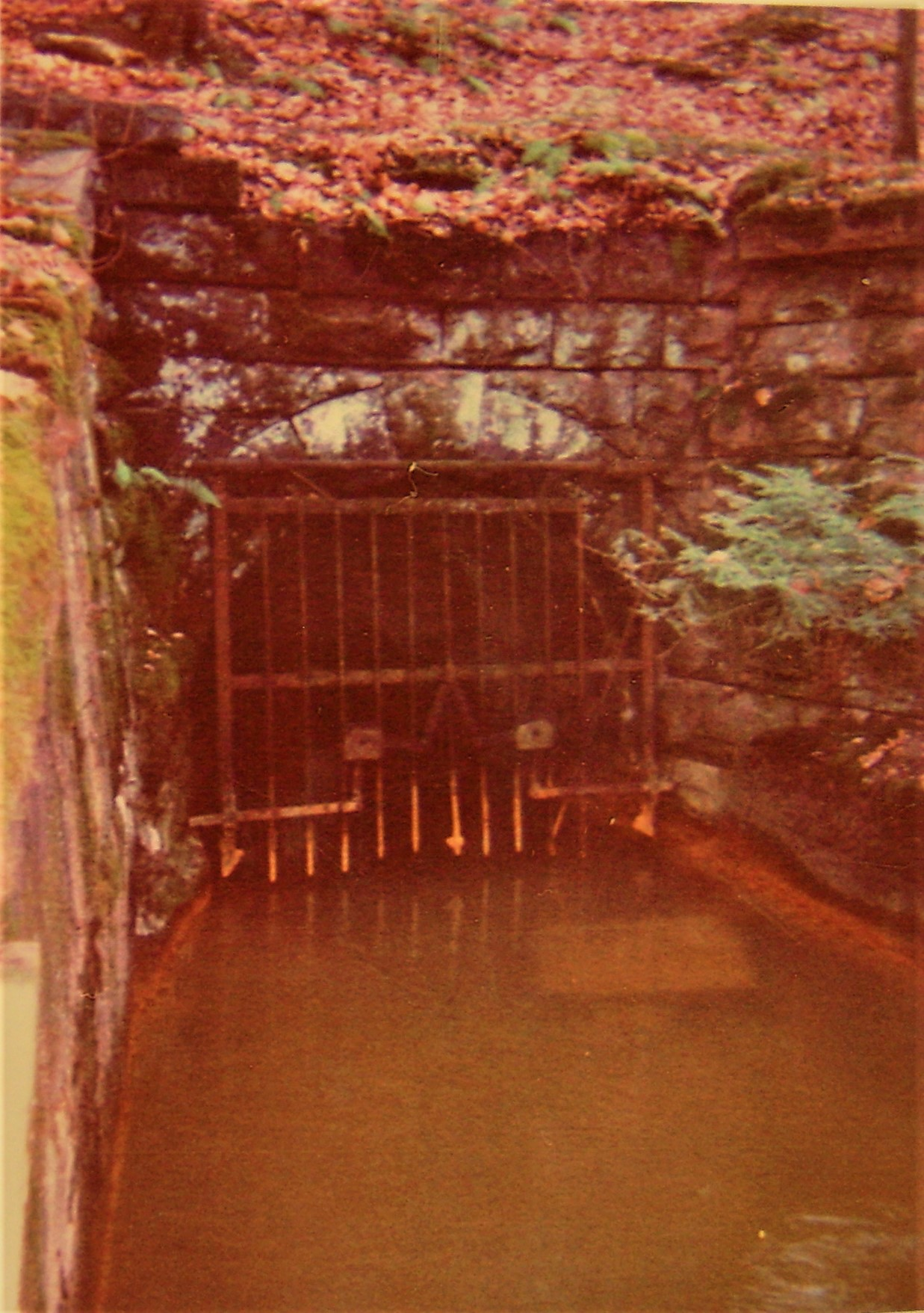 The Jeddo Tunnel, A Discharge in Freeland, PA. Image by Joe Michel, 2001.