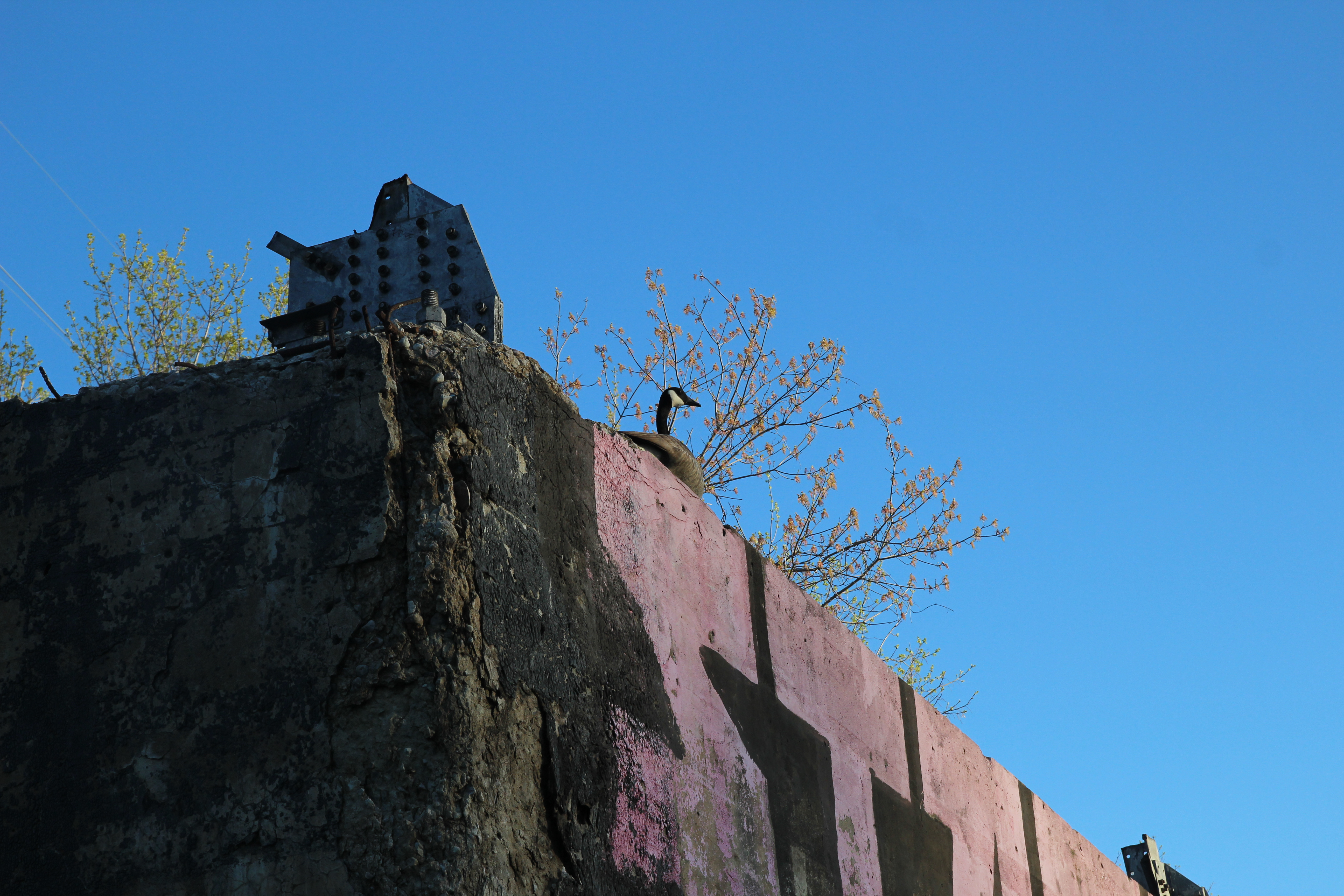 Raspberry Island. A goose sits on the foundation of a demolished building. Photographer Monica Bryand.