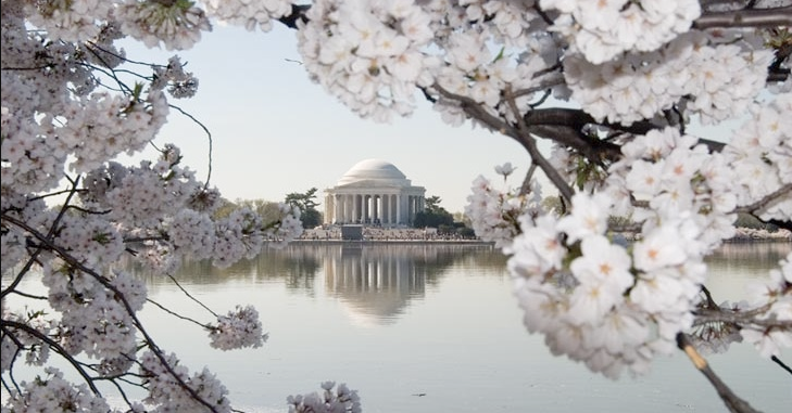 Figure 2: The Tidal Basin in Washington, D.C., with the cherry trees in blossom. Image in public domain.
