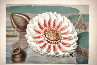John Fisk Allen. 1854. Victoria Regia; Or, The Great Water Lily of America