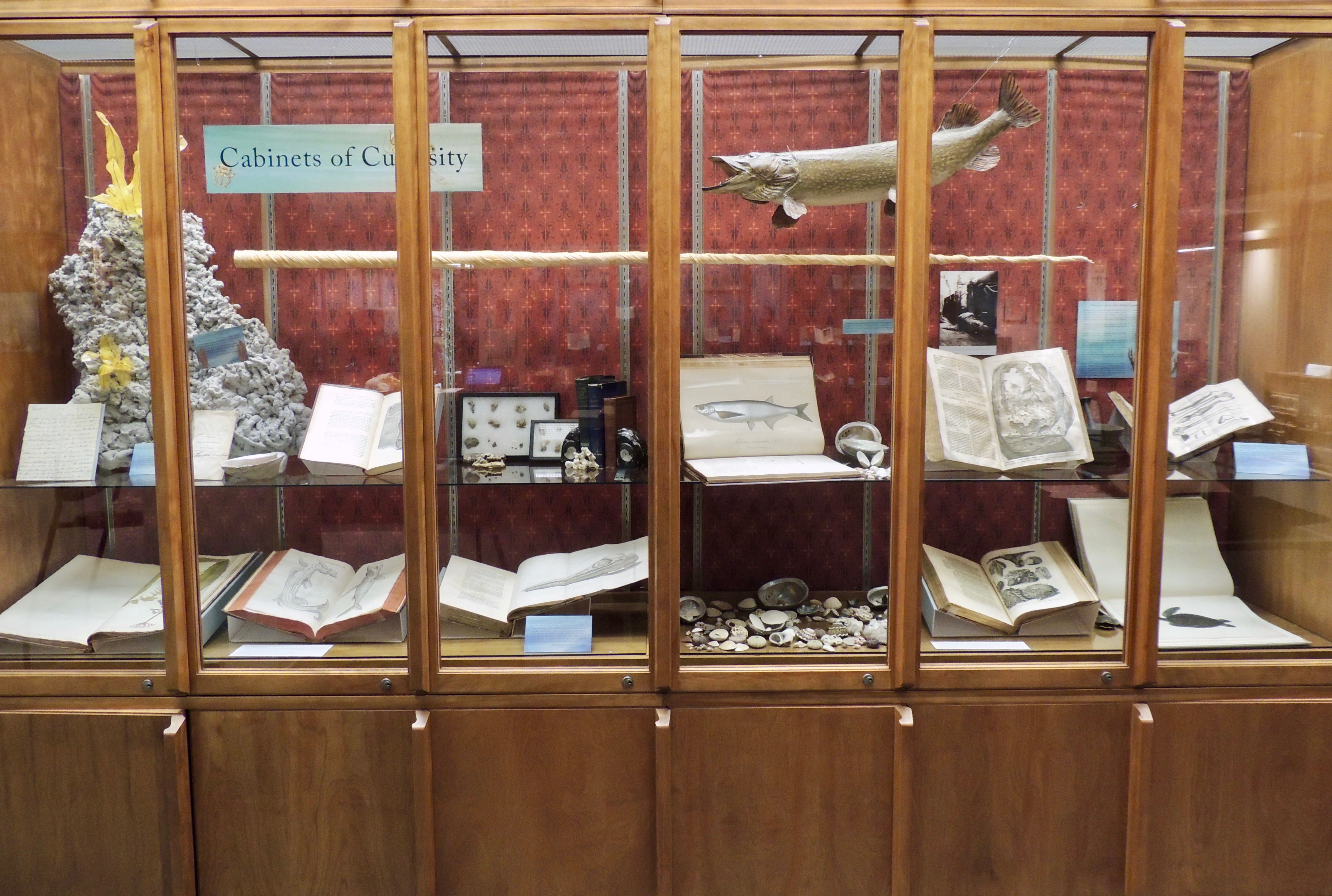 View of 'Chapter 2: Oceanic Research' display. Photo credit Christopher Herzberg, Courtesy of the Wangensteen Historical Library. University of Minnesota.