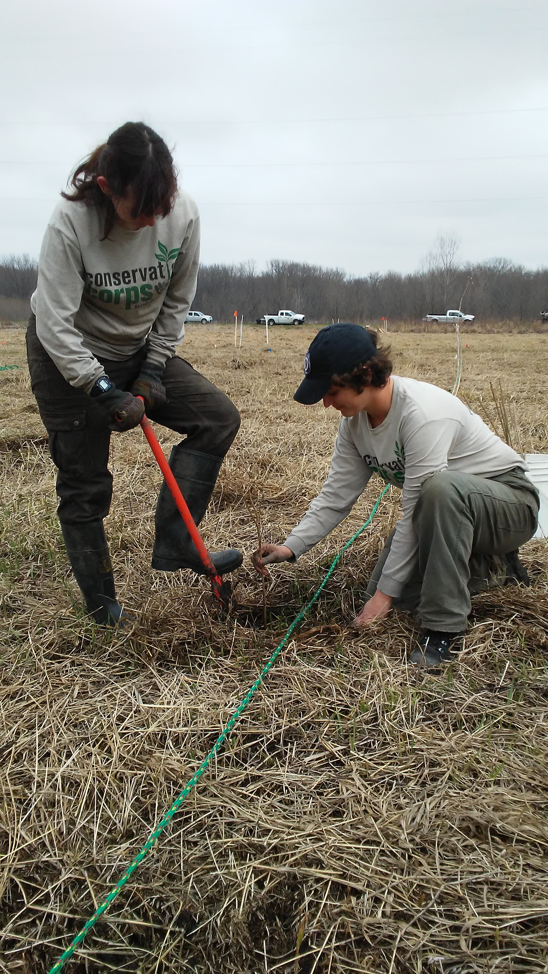 Conservation Corps members helped researchers plant over 12,000 trees in an exact scientific layout, guided by the rope to make sure planting lines were straight. Image courtesy of the author.