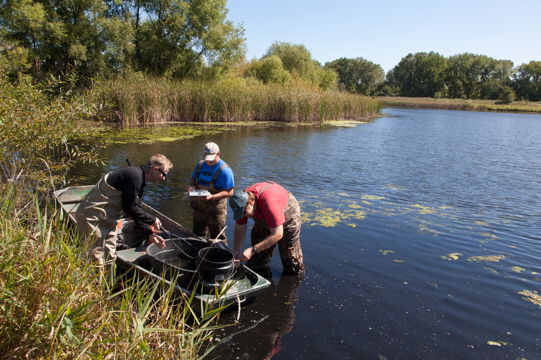 MAISRC researcher Przemek Bajer and his team studying the use of bluegills as a biological control for common carp.