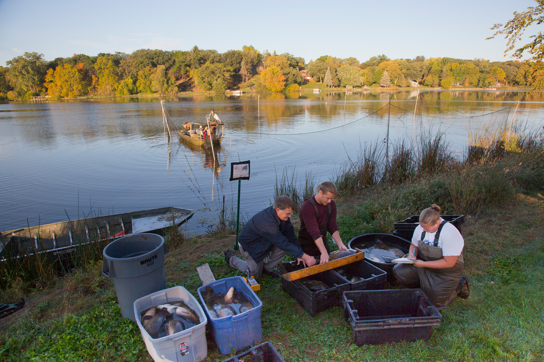 MAISRC researcher Peter Sorensen and his team take measurements of common carp.