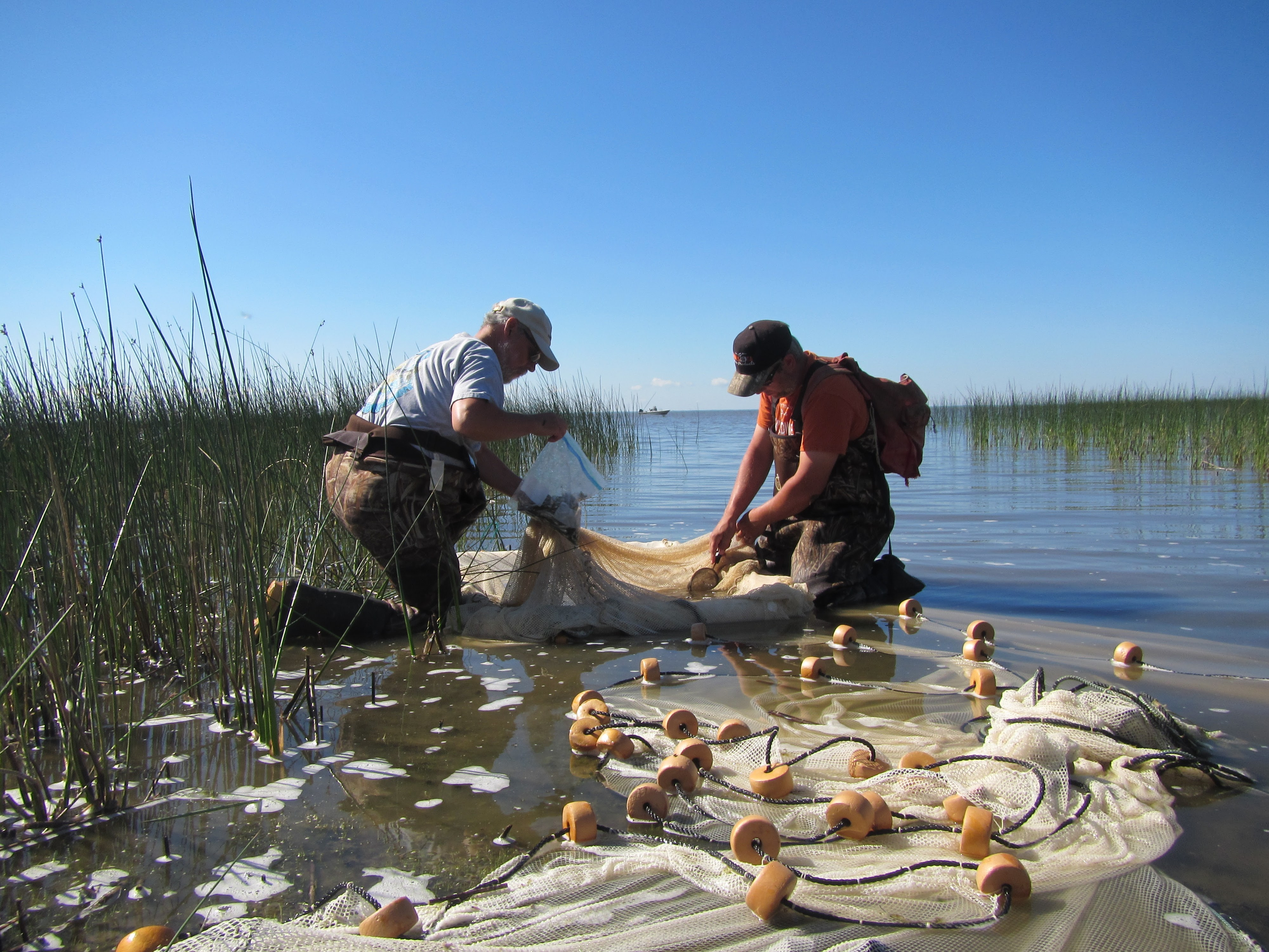 Field work on Red Lake. Two researchers are gathering materials in a large net.
