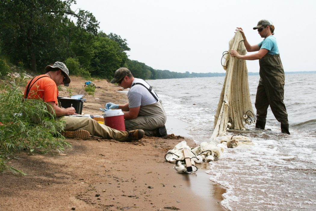 NRRI researchers sort through samples collected at Lake Mille Lacs last summer to understand how invasive species are impacting the food web of walleye.