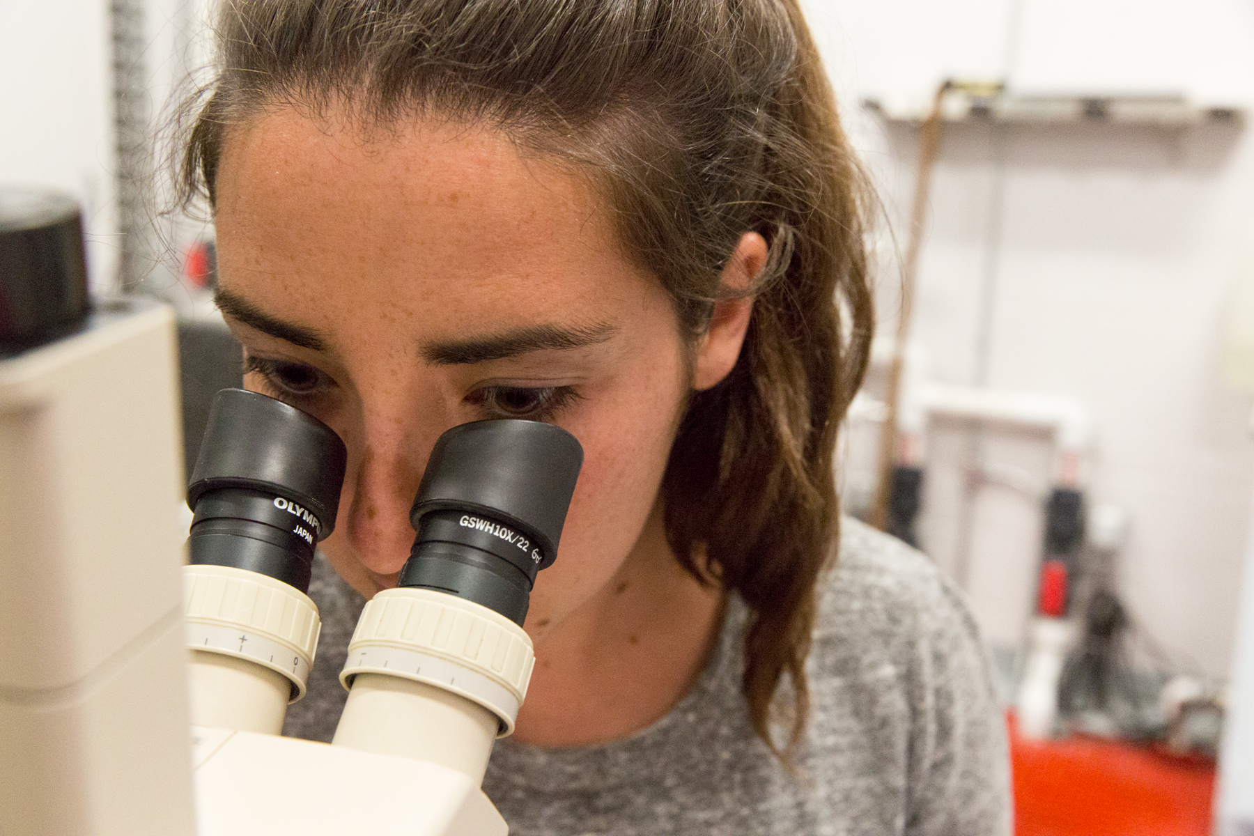 A MAISRC researcher looks at zebra mussel veligers through the microscope.