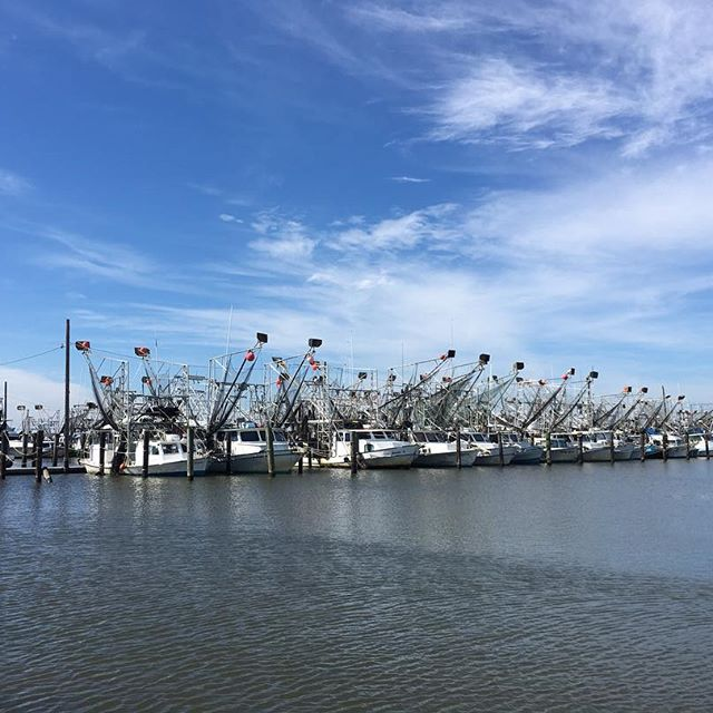 Shrimp boats at the dock on a sunny day.