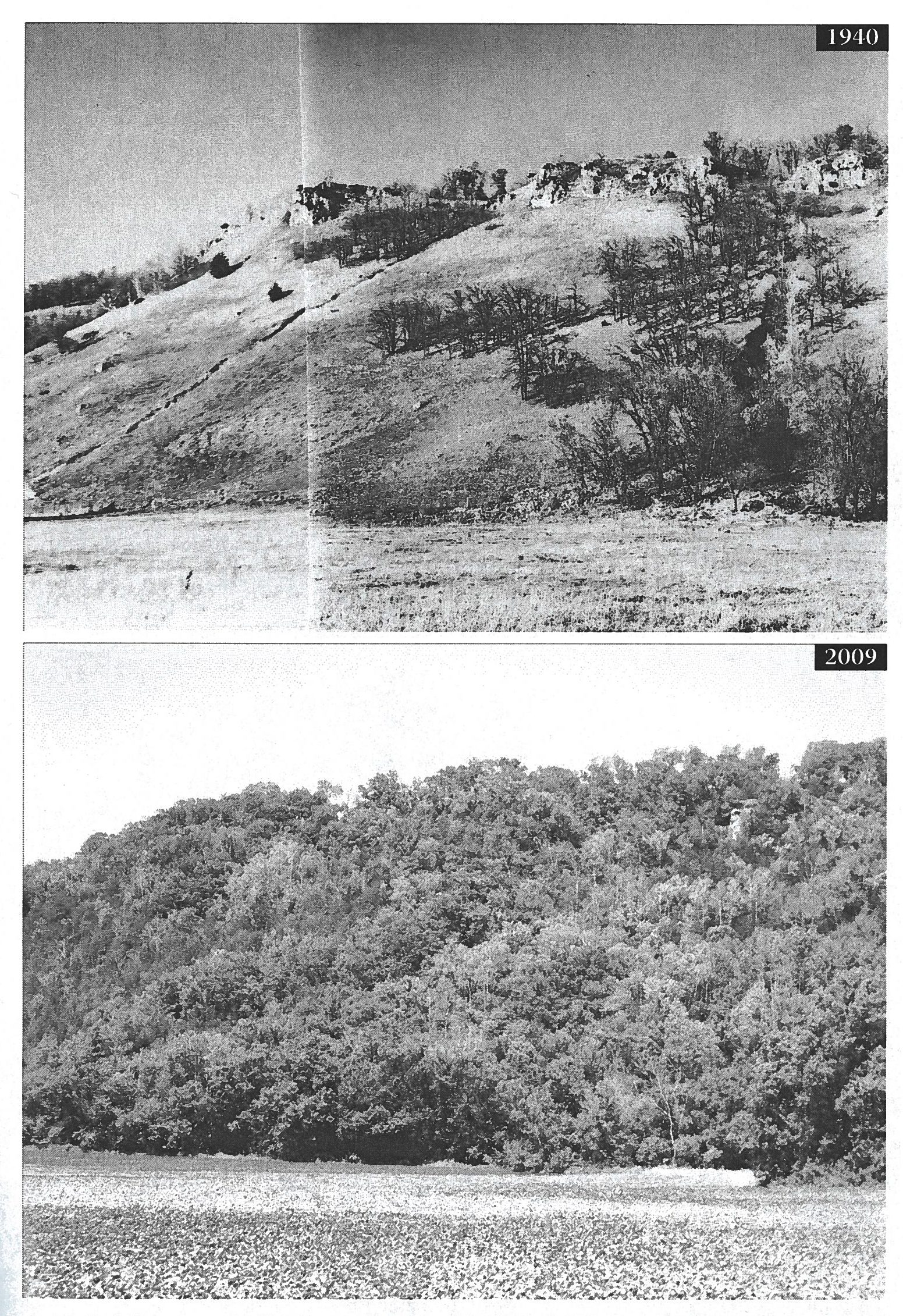 In 1940 (top) much of the native vegetation was cleared, destabilizing the soil and leading to the formation of large gullies. By 2009 (bottom) bluffs were allowed to convert back to native vegetation, stabilizing the gullies and soils. Image courtesy of Stanley W. Trimble.
