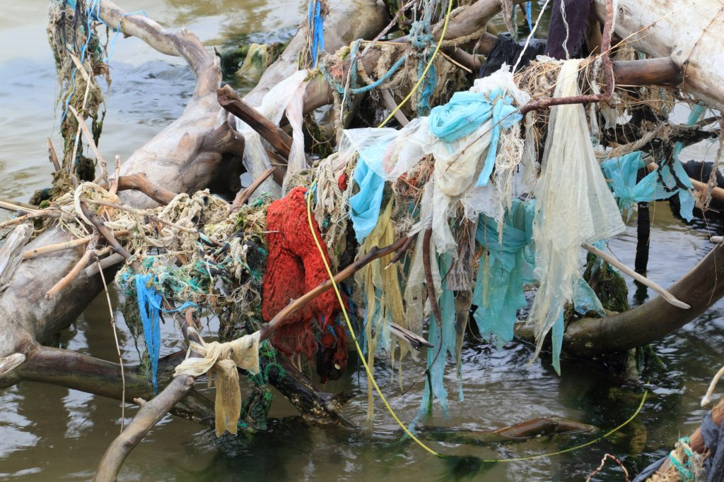 Water pollution on the Latvian coast. Trash is draped all over a tree that has fallen into the water.