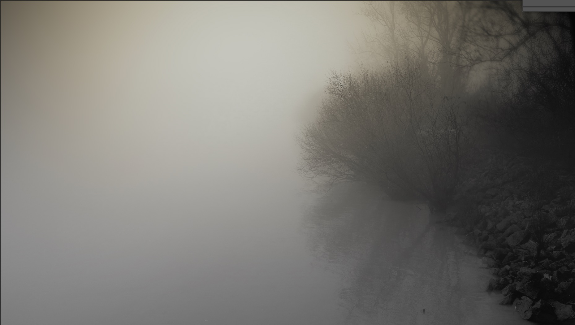 Foggy shot of a bush near a lake.