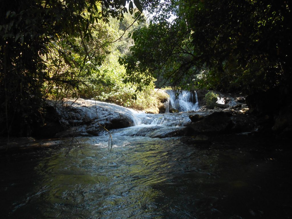 Springs feeding waterfalls at the headwaters of the Icbolay River in Guatemala. The area is a village reserve that is being maintained by local Poqomchi' Maya who emigrated to the region during the Guatemalan civil war. Image courtesy of the author.