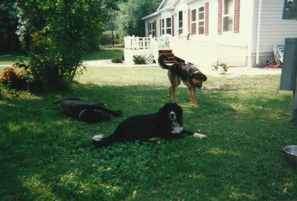 Sara Blue's house before flooding in 1997. Three dogs are on the shaded lawn. Image courtesy of Alex Blue.
