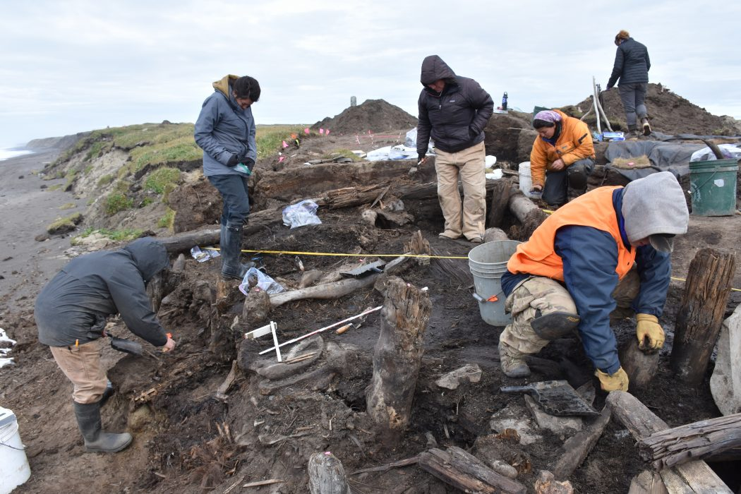 Crew excavating eroding house at Walakpa in 2017. Image courtesy of the Walakpa Archaeological Salvage Project.
