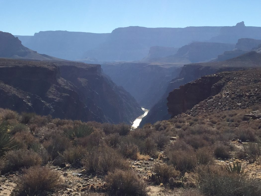 The Colorado River is visible in the distance through a light haze under blue sky, at the base of the Grand Canyon's walls in its inner gorge. Foreground shows the high desert terrace.