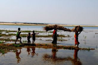 Carrying rushes from the river. Image courtesy of the author.