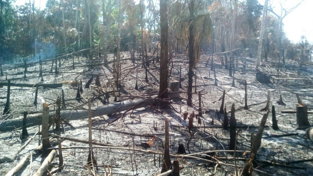 Scorched vegetation inside the Maya Biosphere Reserve at the Archaeological site of El Peruito following attempts to illegally invade the area in 2017. Image courtesy of Ever Sánchez of the Instituto de Antropología e Historia de Guatemala (IDAEH).