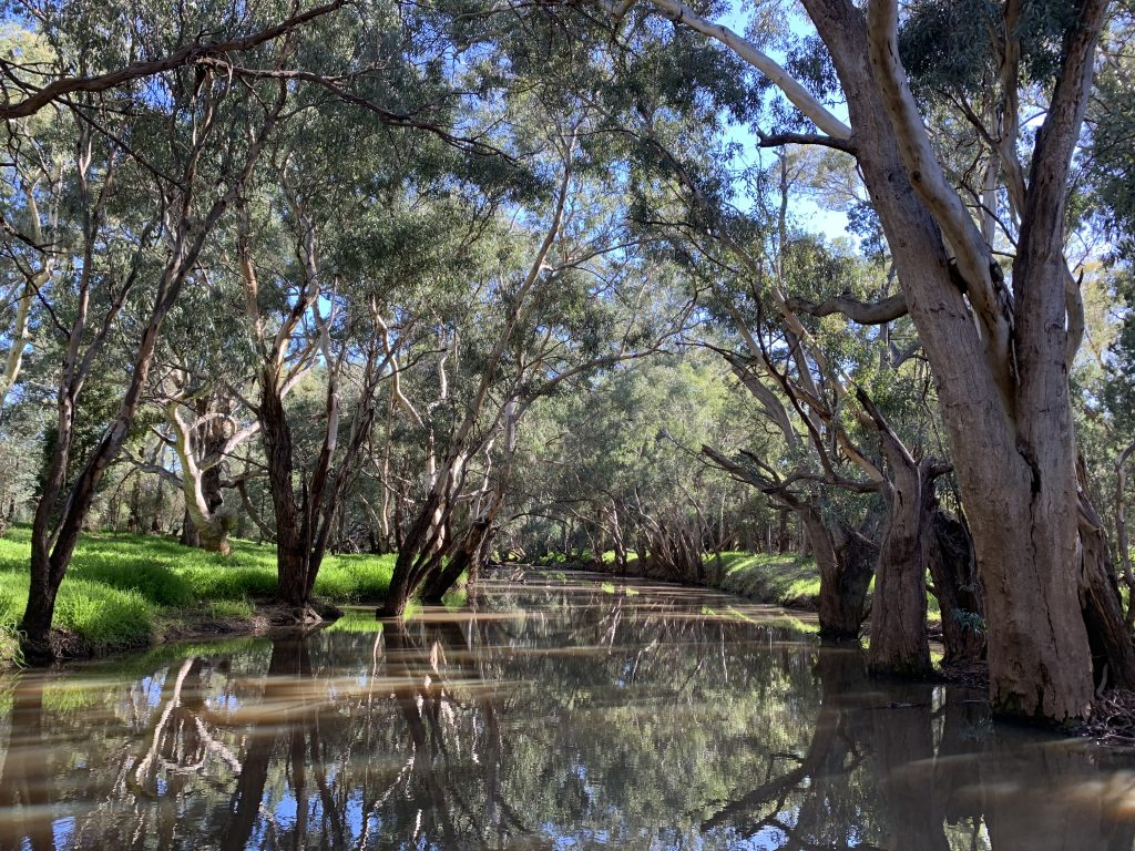 Mirrool Creek at Ardlethan, New South Wales. The Mirrool Creek is a part of the Murrumbidgee catchment within the Riverina region, New South Wales. CC BY-SA 4.0 by Emily Hawthorne.