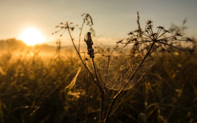 Prairie and spiderweb. Image courtesy of Jan Huber.
