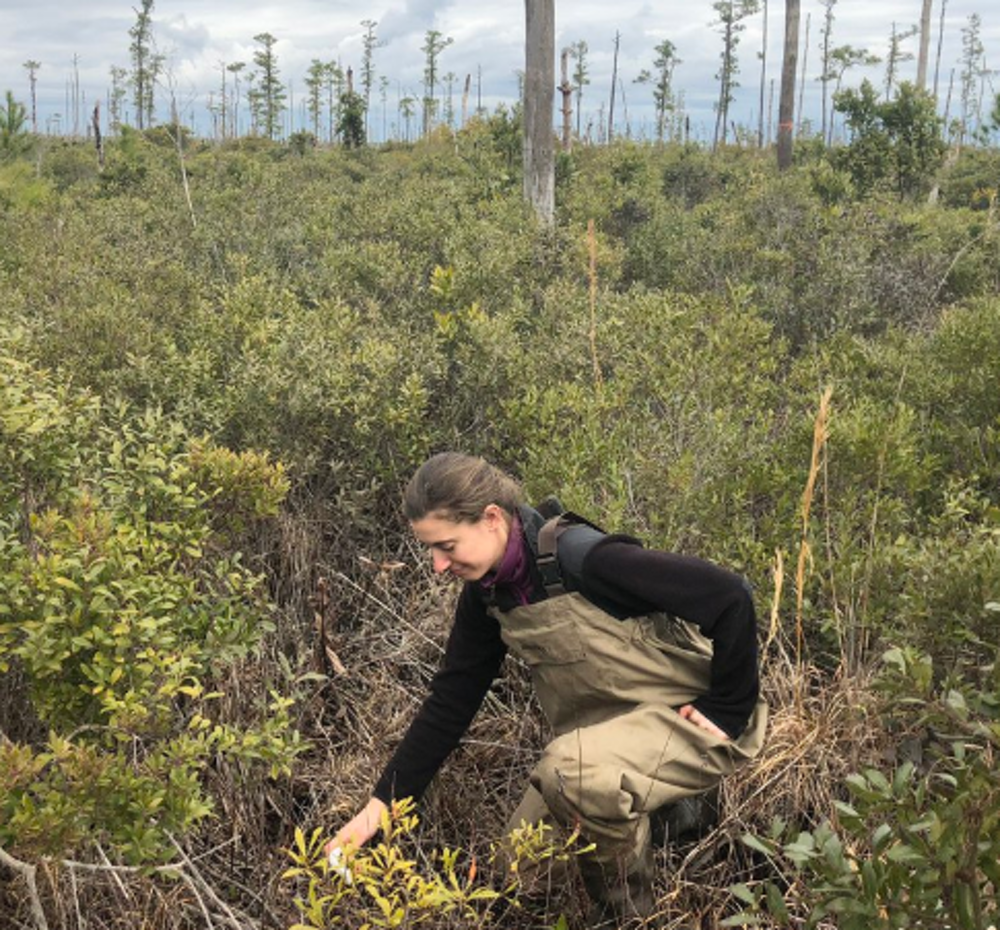 Researcher Emily Ury measuring soil salinity in a ghost forest. Image by Emily Bernhardt, CC BY-ND.