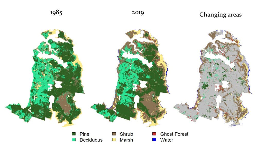 """Habitat maps we created for the Alligator River National Wildlife Refuge showing the change over time and the prevalence of ghost forests. <a href=""""https://doi.org/10.1002/eap.2339"""" target=""""_blank"""">Ury et al, 2021.</a>, CC BY-ND."""