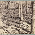 Nature Defamiliarized: Picturing New Relationships between Humans and Nonhuman Nature in Northern Landscapes from the American Civil War