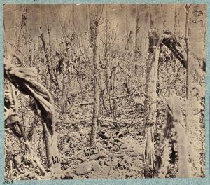 William Bell (?), Views in the woods in the Federal lines on north side of Orange Plank Road, 1866. Albumen print. (Library of Congress, Prints and Photographs Division, Washington, DC, LC-DIG-ppmsca-23672.)