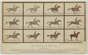 "Fig. 5. Eadweard Muybridge, The Horse in Motion: ""Sallie Gardner,"" 1878. Albumen photograph mounted on card, dimensions unknown. Iris and B. Gerald Cantor Center for Visual Arts at Stanford University, Stanford Family Collections."