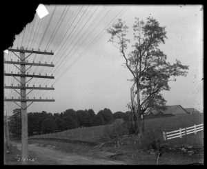 Fig. 6 William N. Jennings, Tree Struck by Lightning, West Chester, PA, n.d. Glass plate negative. The Library Company of Philadelphia.